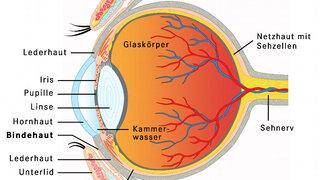 Infografik Auge