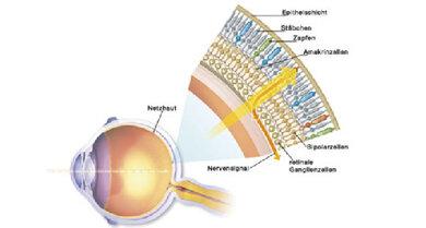 Aufbau der Retina mit Stäbchen und Zapfen