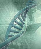 Die Neigung zu Bechterew kann bereits in den Erbanlagen, den Genen, liegen. Im Bild ein Modell der Erbsubstanz DNA