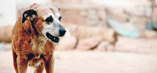 Streundender Hund