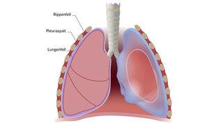 Illustration einer Lunge