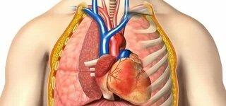 Herz (Schematische Darstellung)