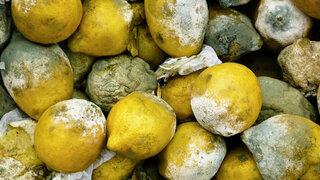 Zitronen im Biomüll