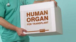Transplantation menschlicher Organe