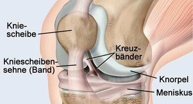 Anatomische Darstellung des Kniegelenkes