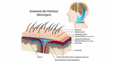 Anatomie der Hirnhäute