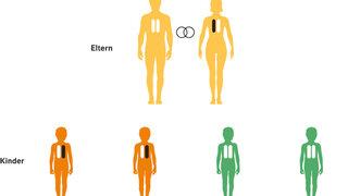 Infografik Autosomal-dominanter Erbgang