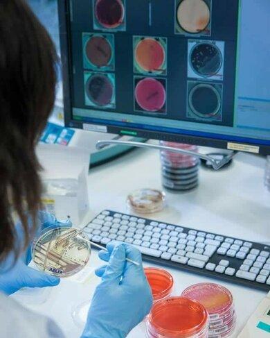 Auswertung von in Petrischalen angezüchteten Bakterienkulturen