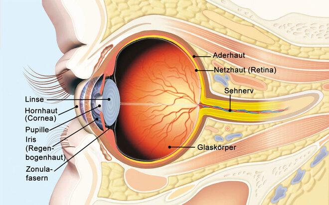 Schematische Darstellung eines Auges