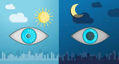 Pupille und Licht: Bei Tagsehen ist die Pupille eher enger, bei Nachtsehen weiter (vereinfachtes Schema)
