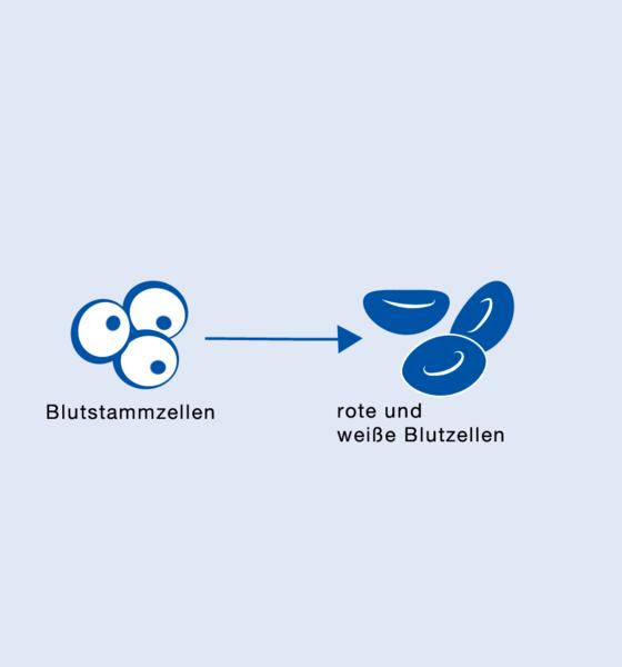 Ersatzorgane aus Stammzellen