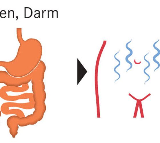Darm Magen Bauchschmerzen Verdauung Unterleib