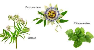 Heilsames Grün: Extrakte aus diesen Pflanzen wirken entspannend