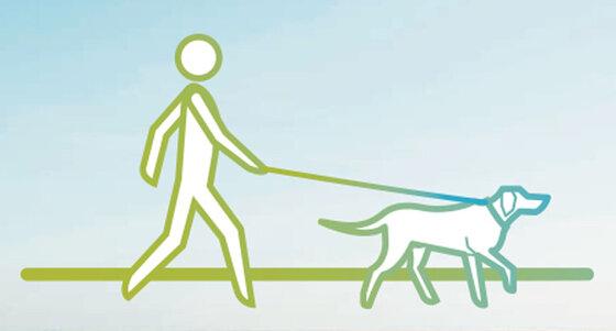 Infografik: Spaziergang mit Hund