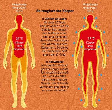 Blutgefäße und Schweißdrüsen reagieren verstärkt auf hohe Außentemperaturen