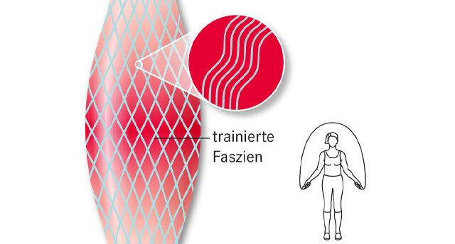 Infografik: trainierte Faszien