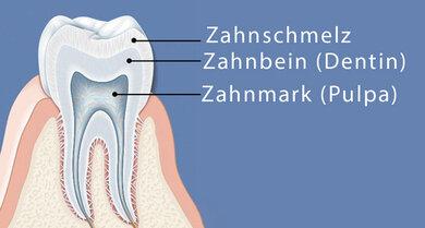 Das Bild zeigt: Aus diesen Schichten besteht ein gesunder Zahn.