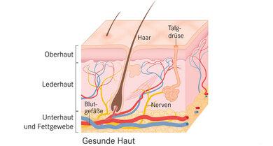 Schematischer Überblick über die einzelnen Hautschichten