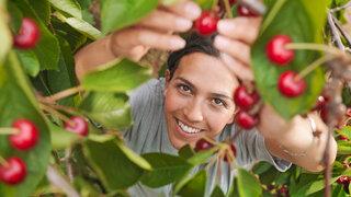 junge Frau blickt nach oben und pflückt Kirschen