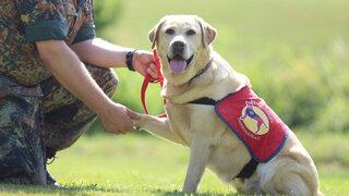 Wie Therapiehunde traumatisierten Soldaten helfen