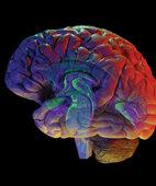 Botenstoffe im Gehirn spielen eine Rolle bei der Entstehung von Süchten