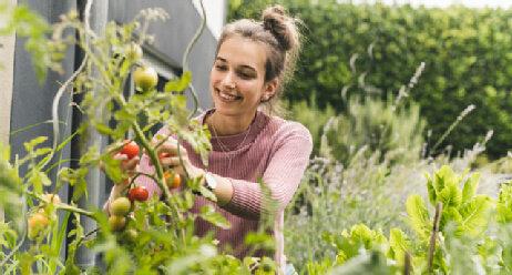 Gartencoaching Frau Tomaten Gärtnern