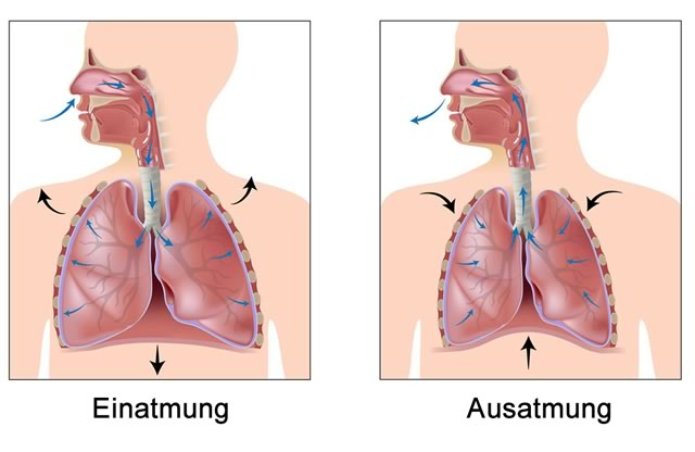 Illustration der Atmung